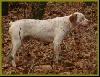 Crunsh du Marais Becassier